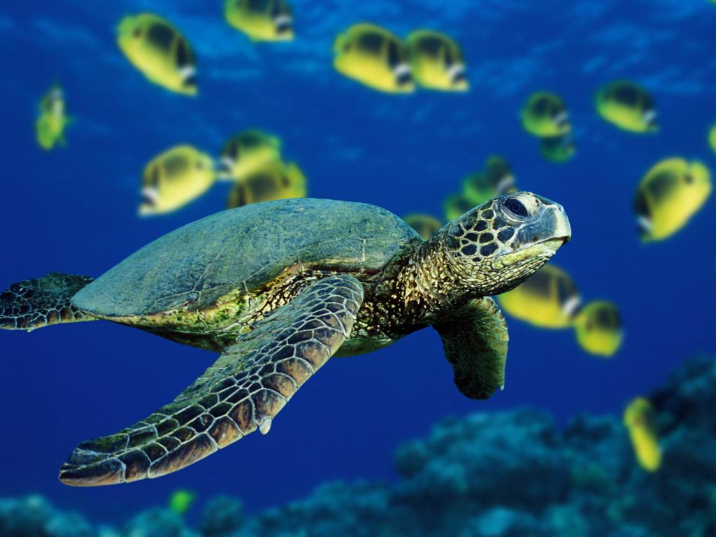 Sea Life   Sea Life Wallpaper 32310890 1024x768