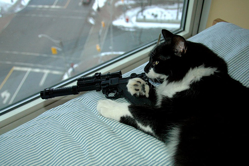 sniper cat Flickr   Photo Sharing 500x333