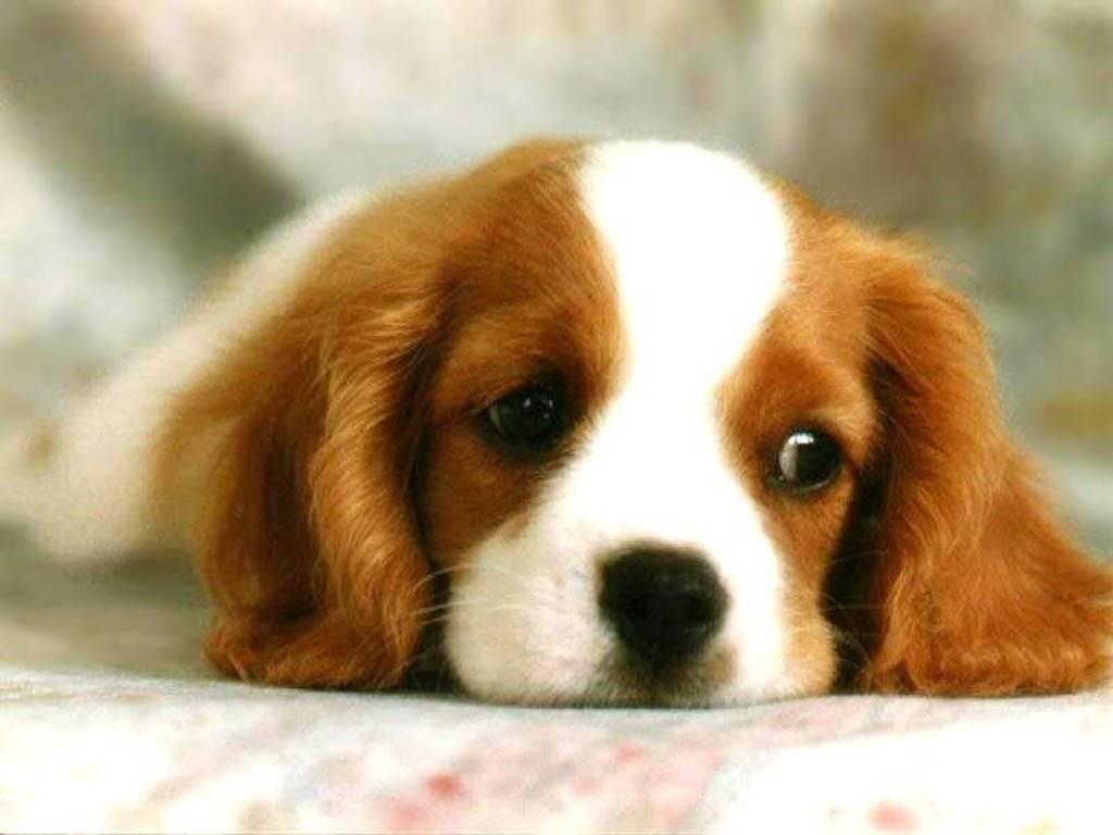 cute dog   Dogs Wallpaper 1024x768