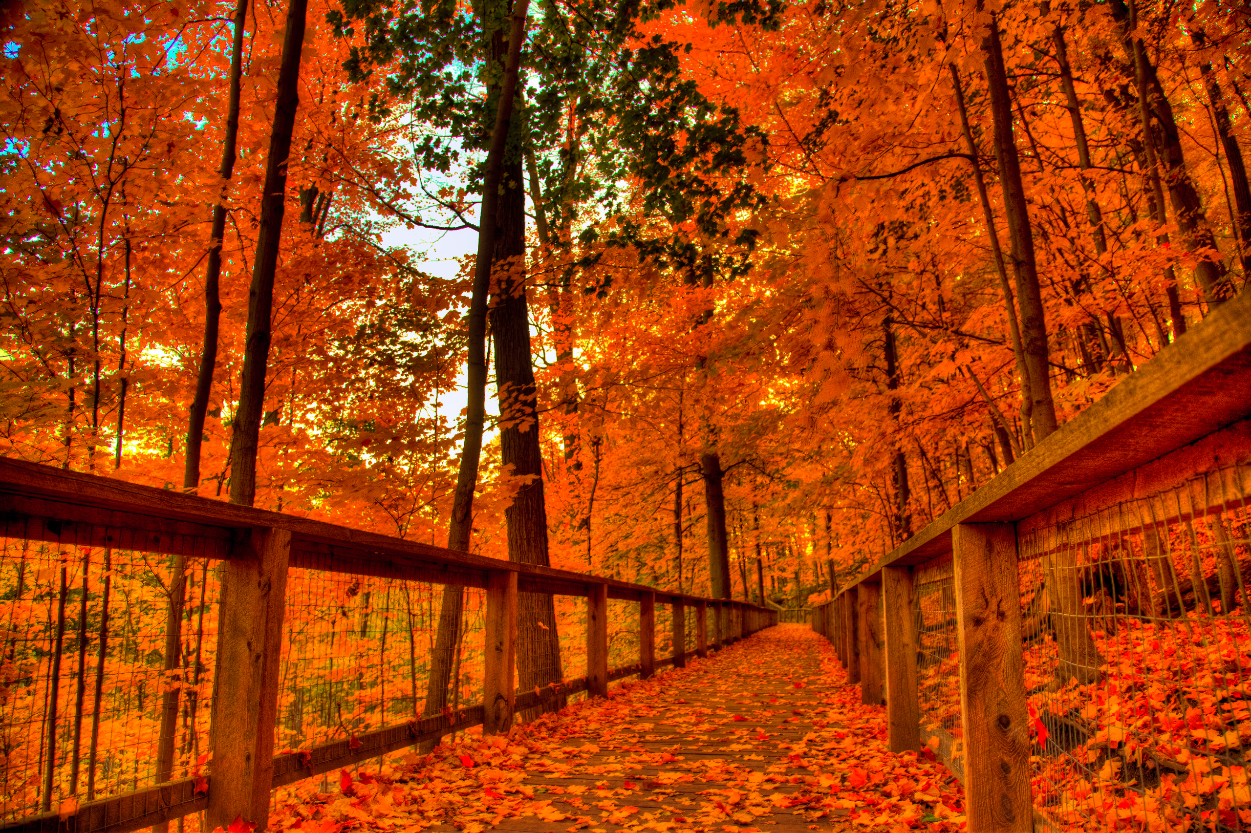 Android Wallpaper: Autumn Colors