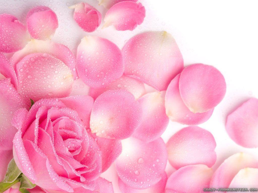 1024x768px light pink flower wallpaper wallpapersafari light pink flower wallpapers 1024x768 mightylinksfo