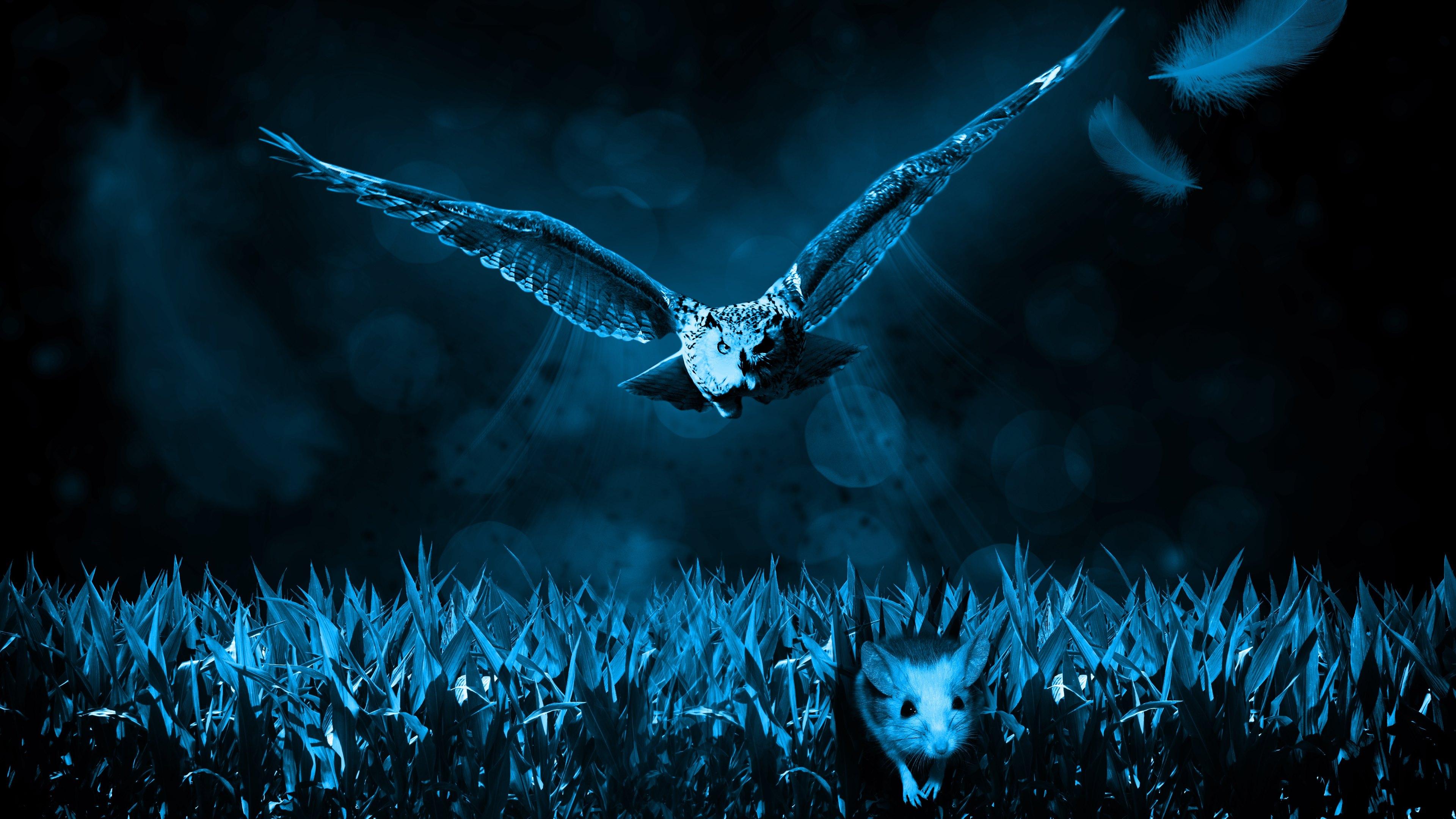 4k Owl Wallpaper Wallpapersafari