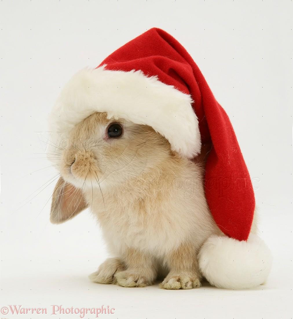 Картинки года кролика