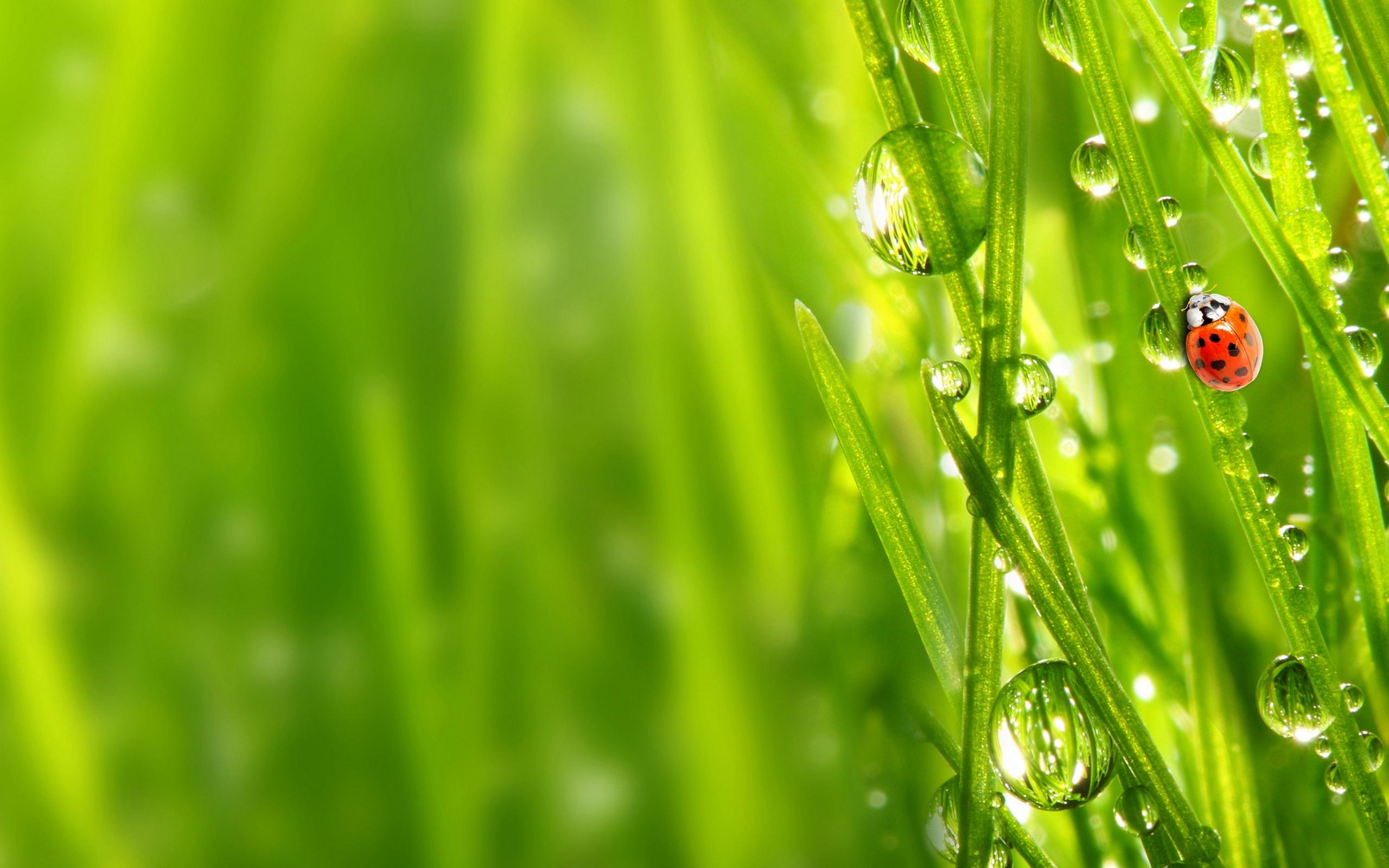 Grass Wallpaper - WallpaperSafari