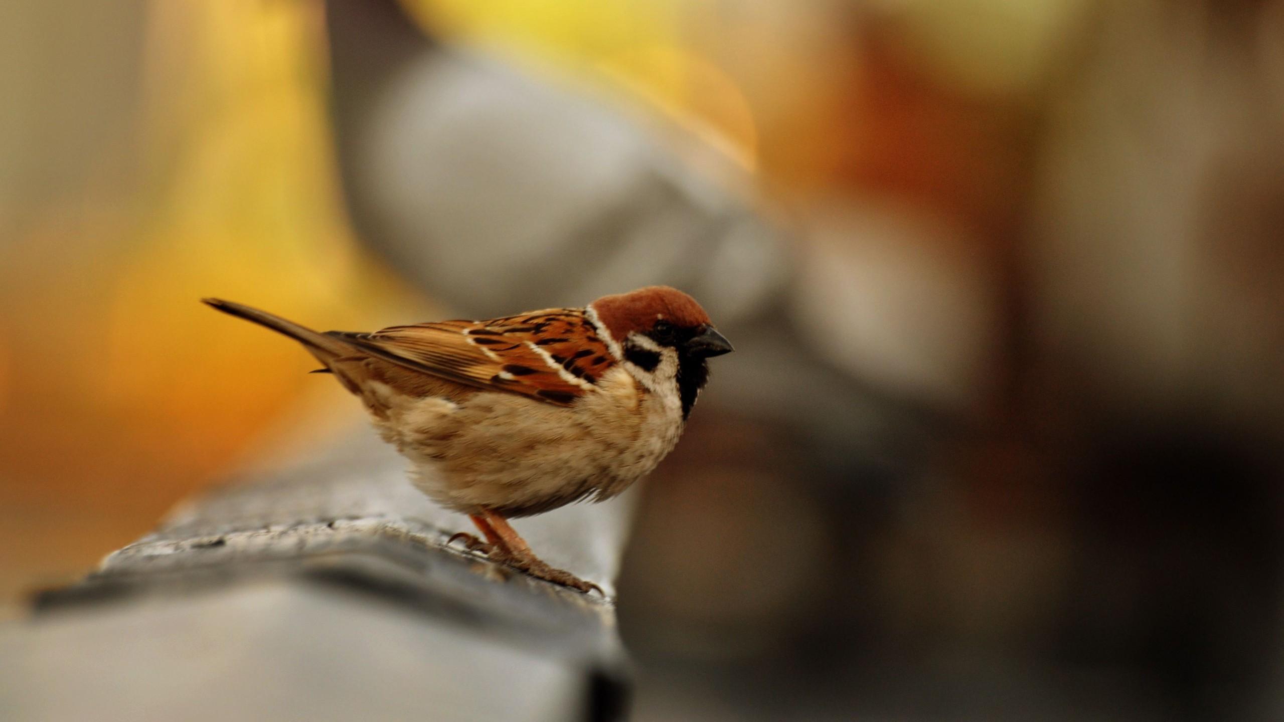 Bird Santa Banta Desktop HD Wallpaper 2560x1440