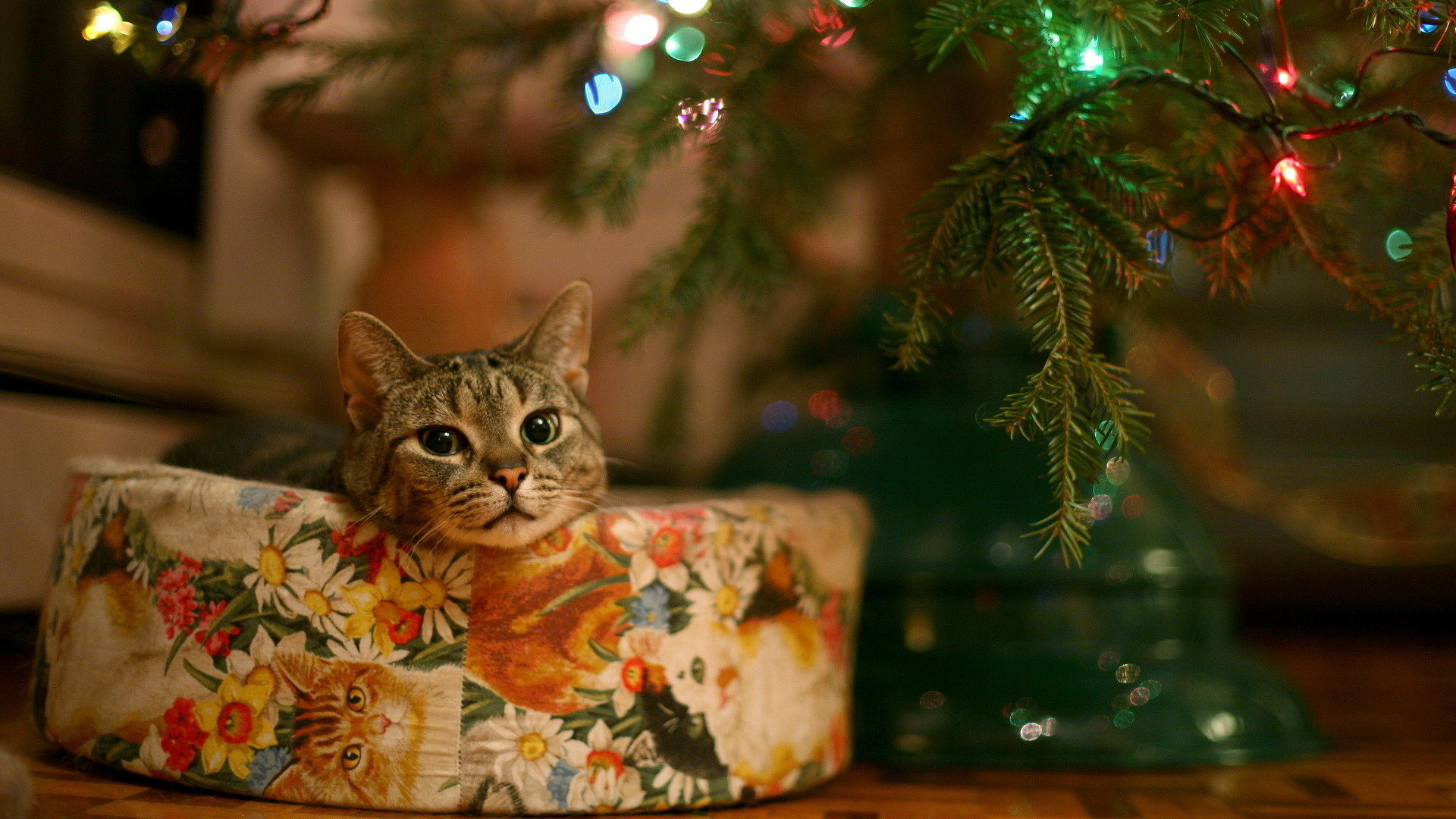 Cute christmas cat Full HD 1080p wallpaper 19201080 Cat 1920x1080