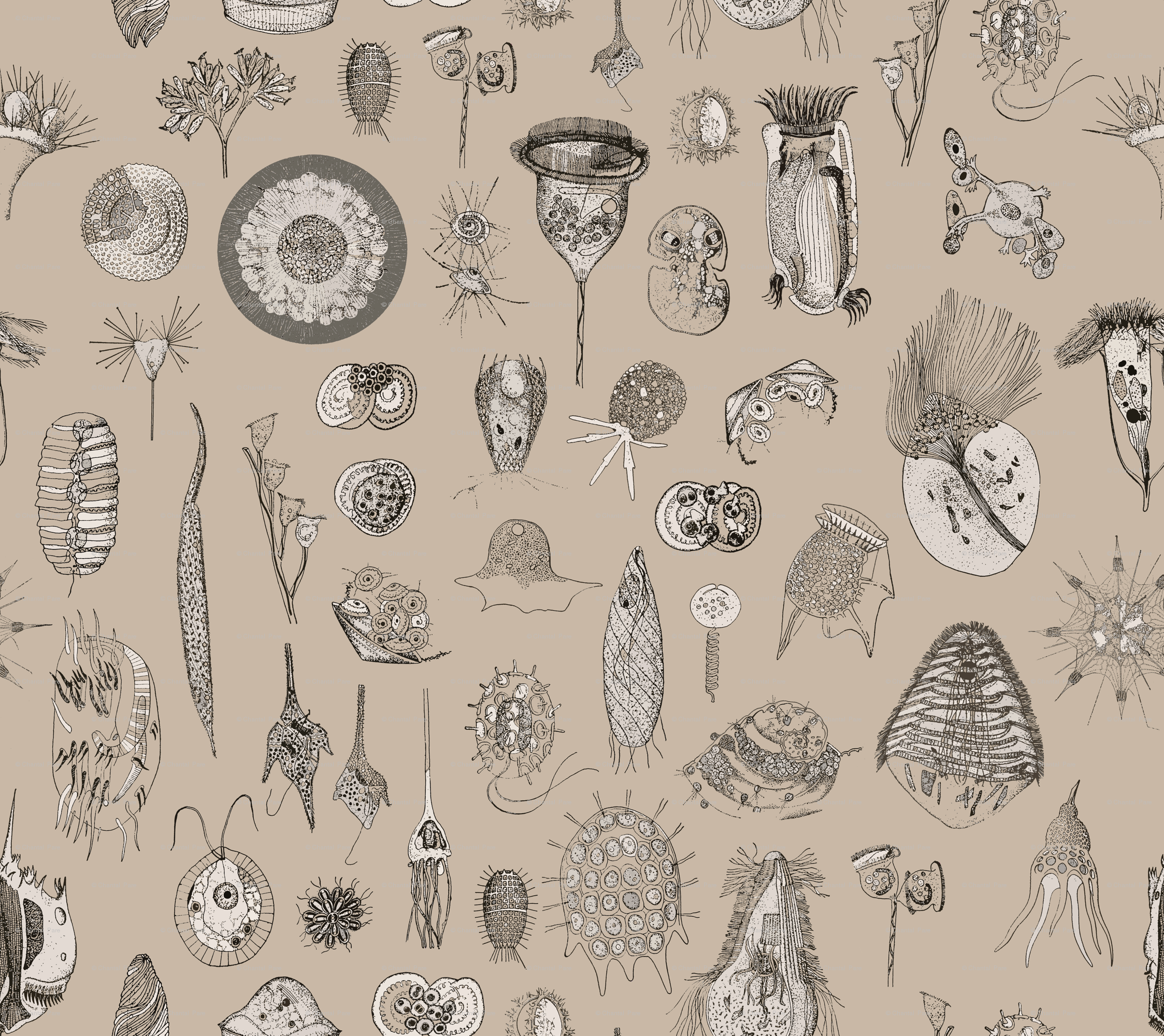 Super Giant Protozoa Beige wallpaper   chantal pare   Spoonflower 2247x1999