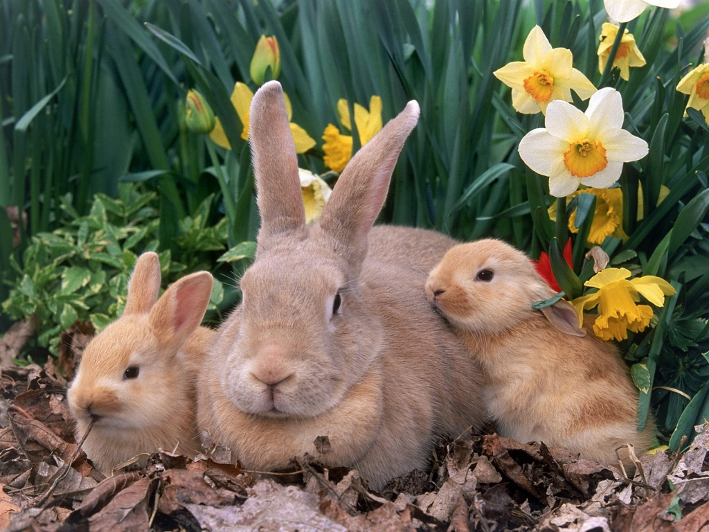 THREE CUTE EASTER BUNNIES WALLPAPER   2818   HD Wallpapers 1024x768