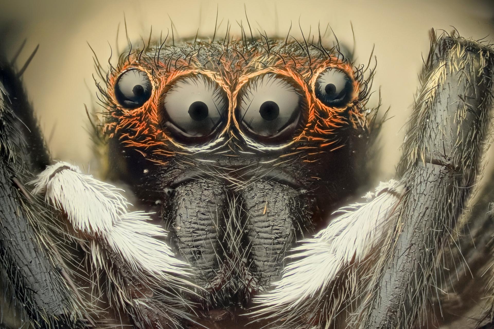 Download Spiders Wallpaper 1920x1280 Wallpoper 290816 1920x1280