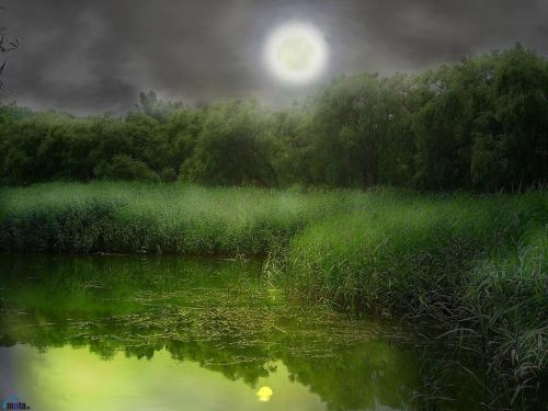 Swamp Wallpaper 500x375