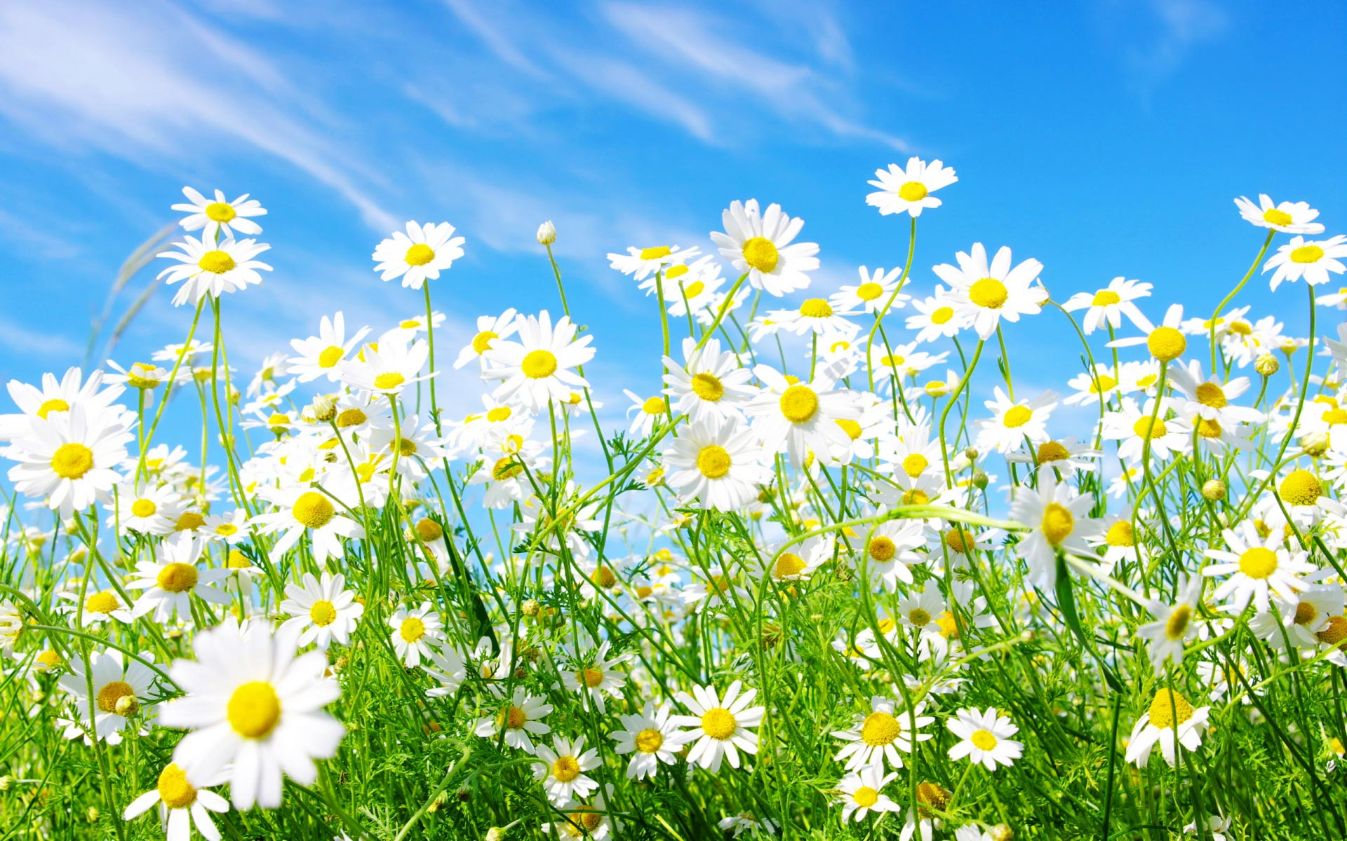download desktop backgrounds for spring which is under the spring 1920x1200