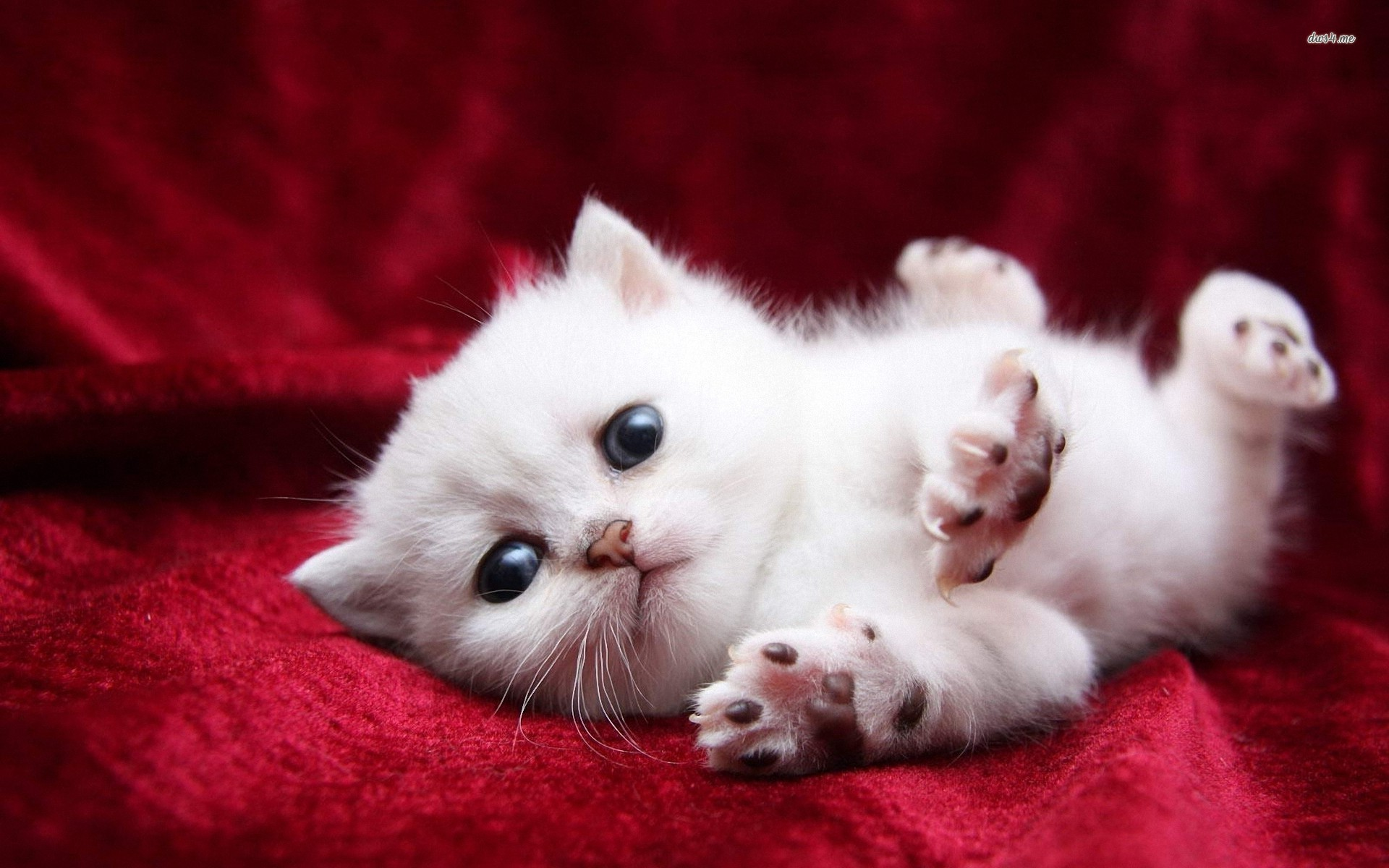 Cute Cats and Kittens Wallpaper - WallpaperSafari