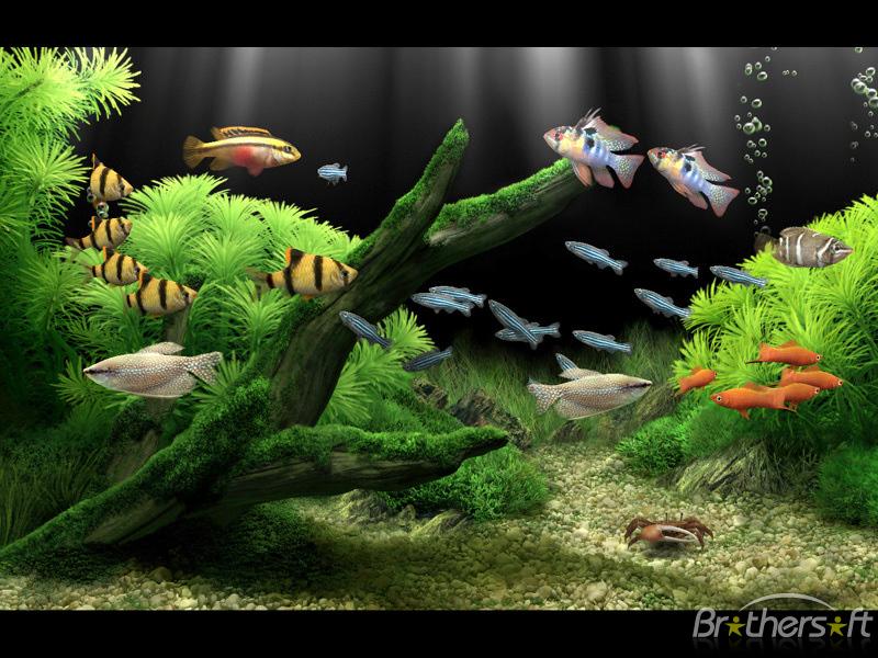 Download Dream Aquarium Screensaver Dream Aquarium Screensaver 1 800x600