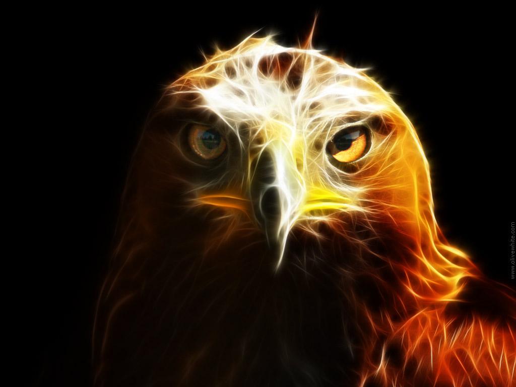Eagles Hd Wallpaper Wallpapersafari