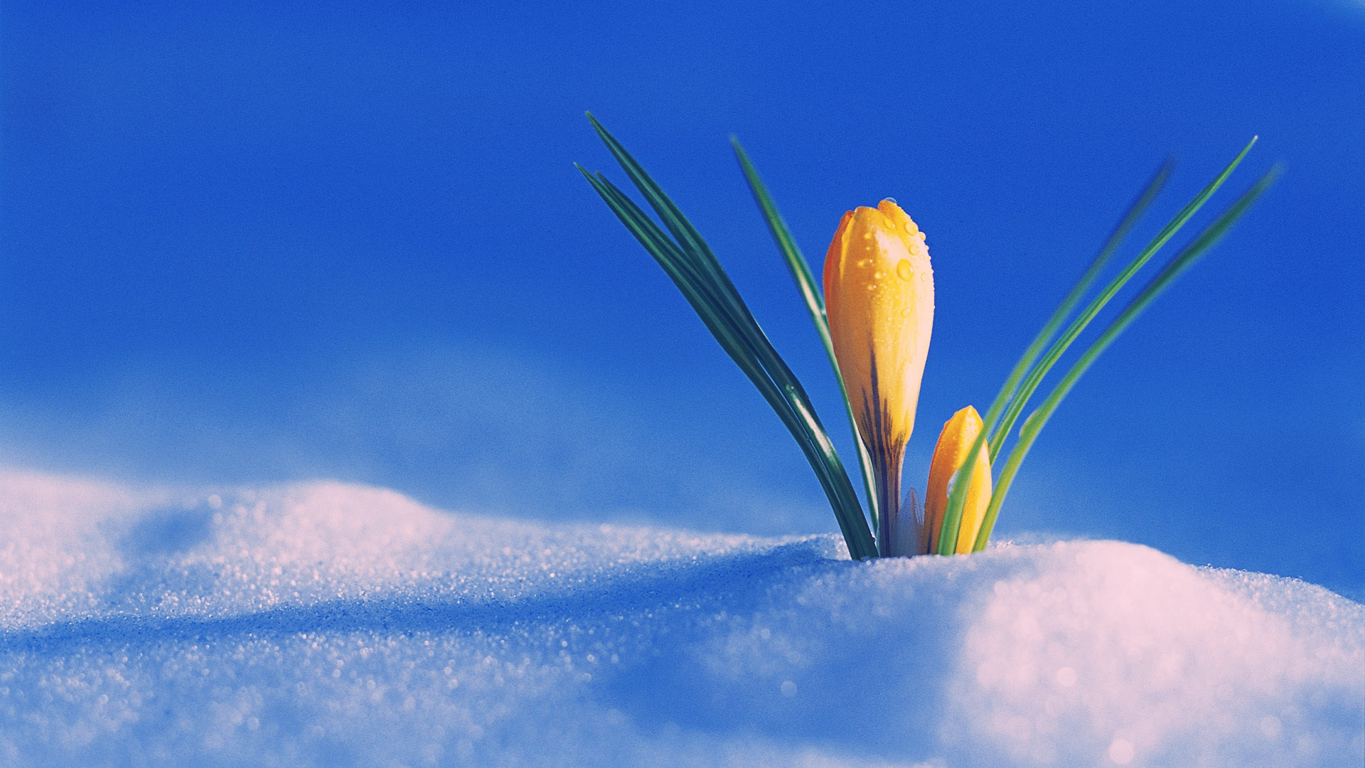 the first day of spring wallpaper for 1920x1080 hdtv 1080p 607 15 1920x1080