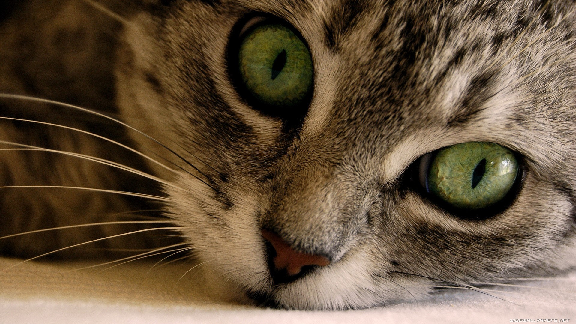 Eyes Cats Wallpaper 1920x1080 Eyes Cats Animals Green Eyes 1920x1080
