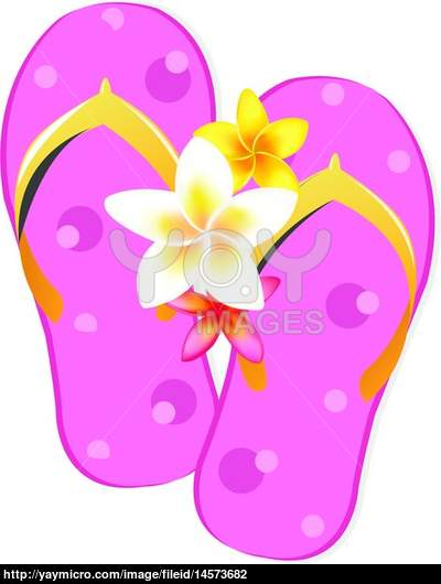 Flip Flop Sandals With Plumeria Flowers Isolated On White Background 400x530