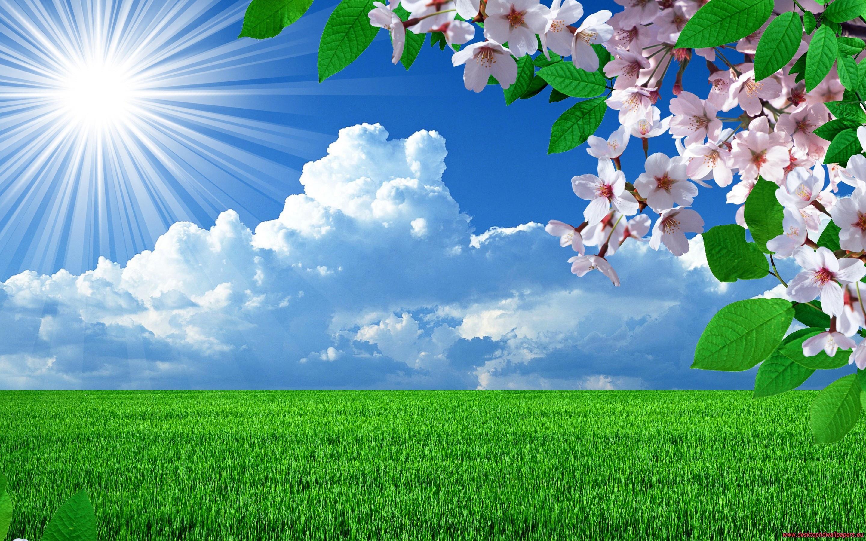 nature spring flowers landscapes trees sky landscape background images 2880x1800