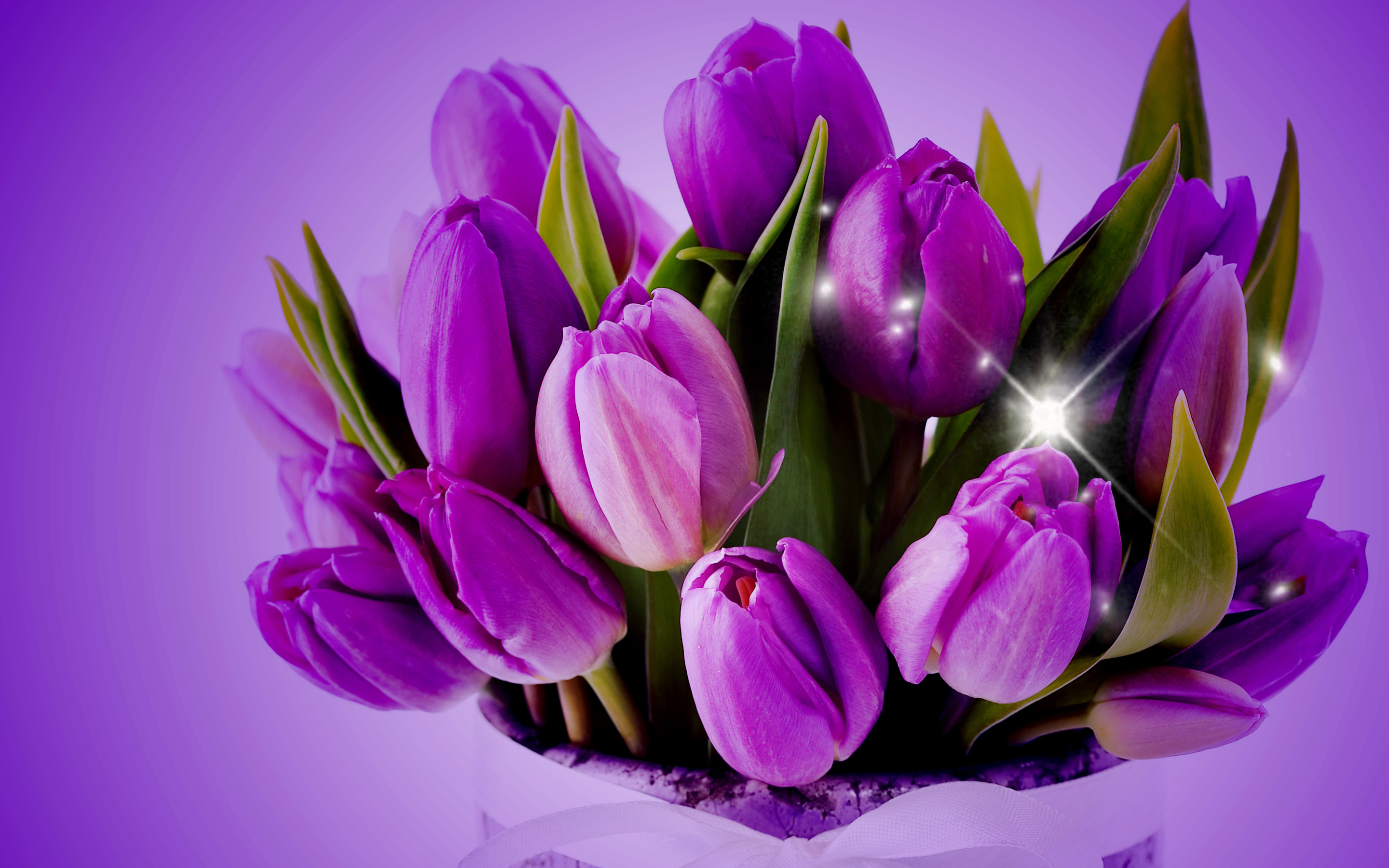 purple tulips hd wallpaper - photo #8