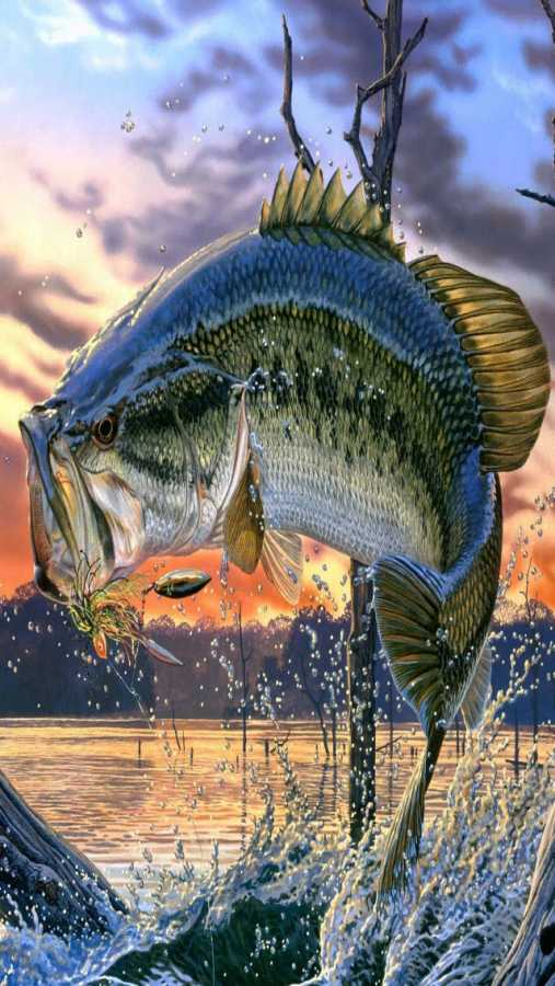 Bass Fish Wallpaper for iPhone - WallpaperSafari