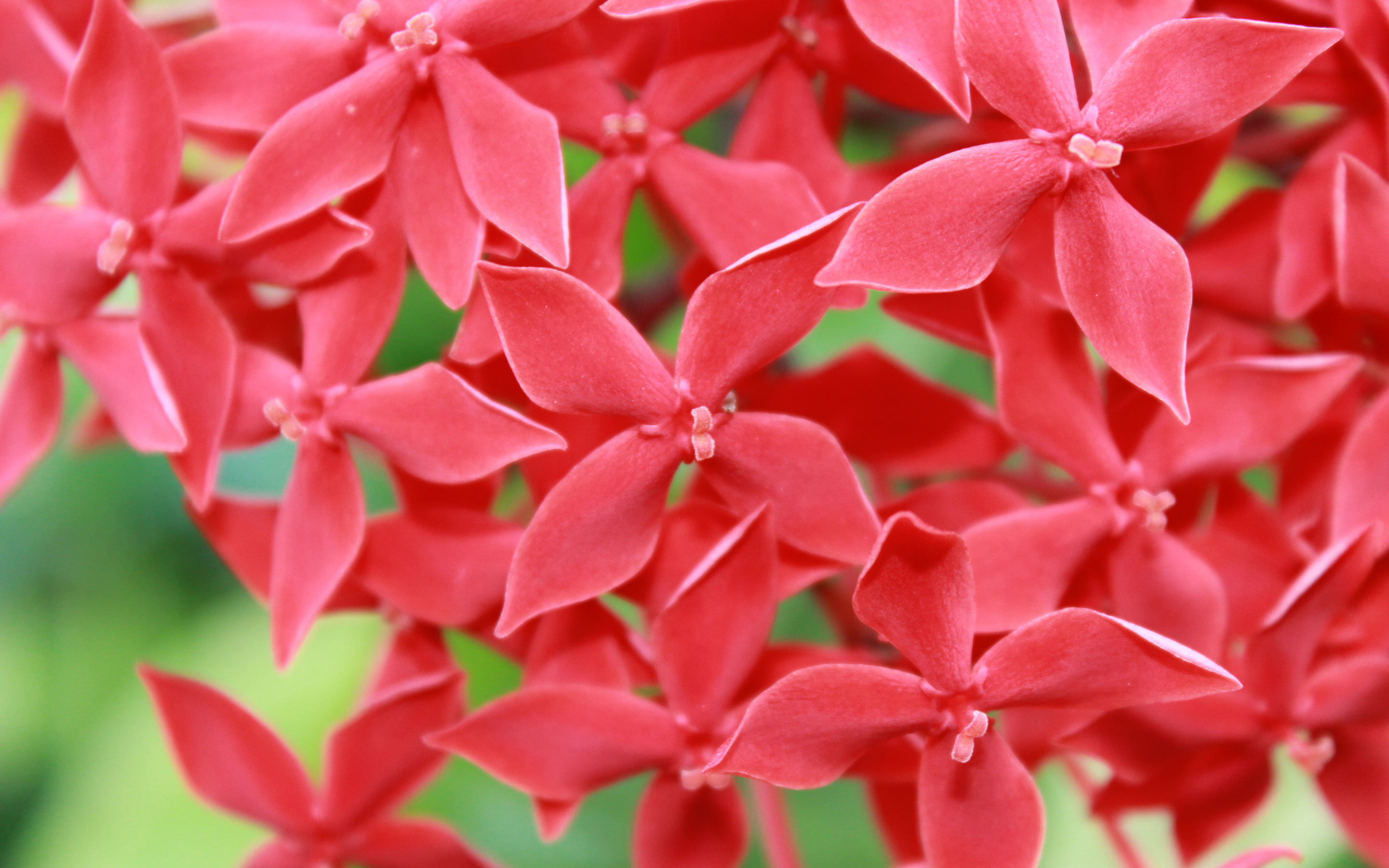 Small Red Flowers wallpaper   1088445 2880x1800