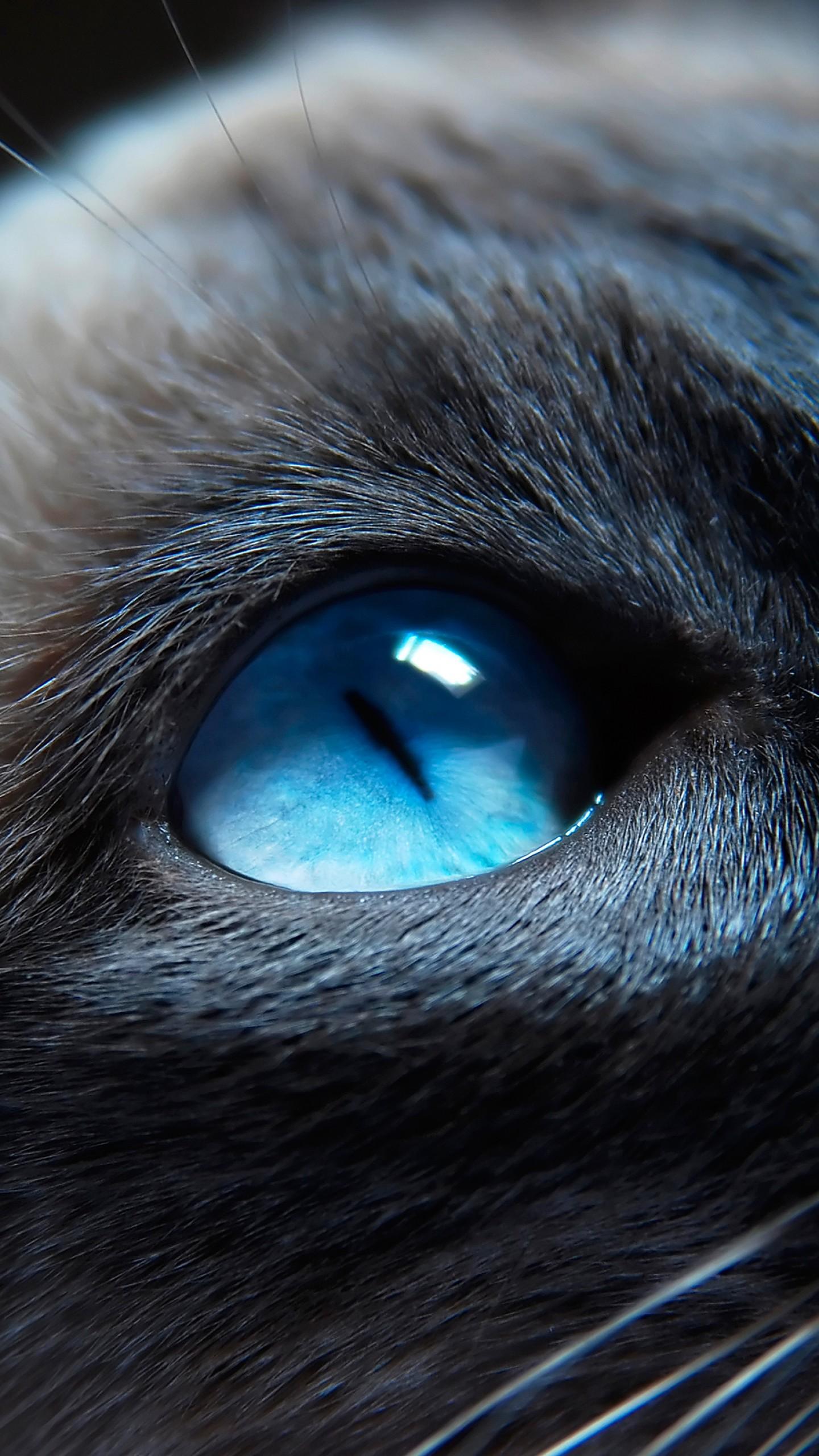Wallpaper cat kitty siamese blue eyes muzzle beautiful close 1440x2560
