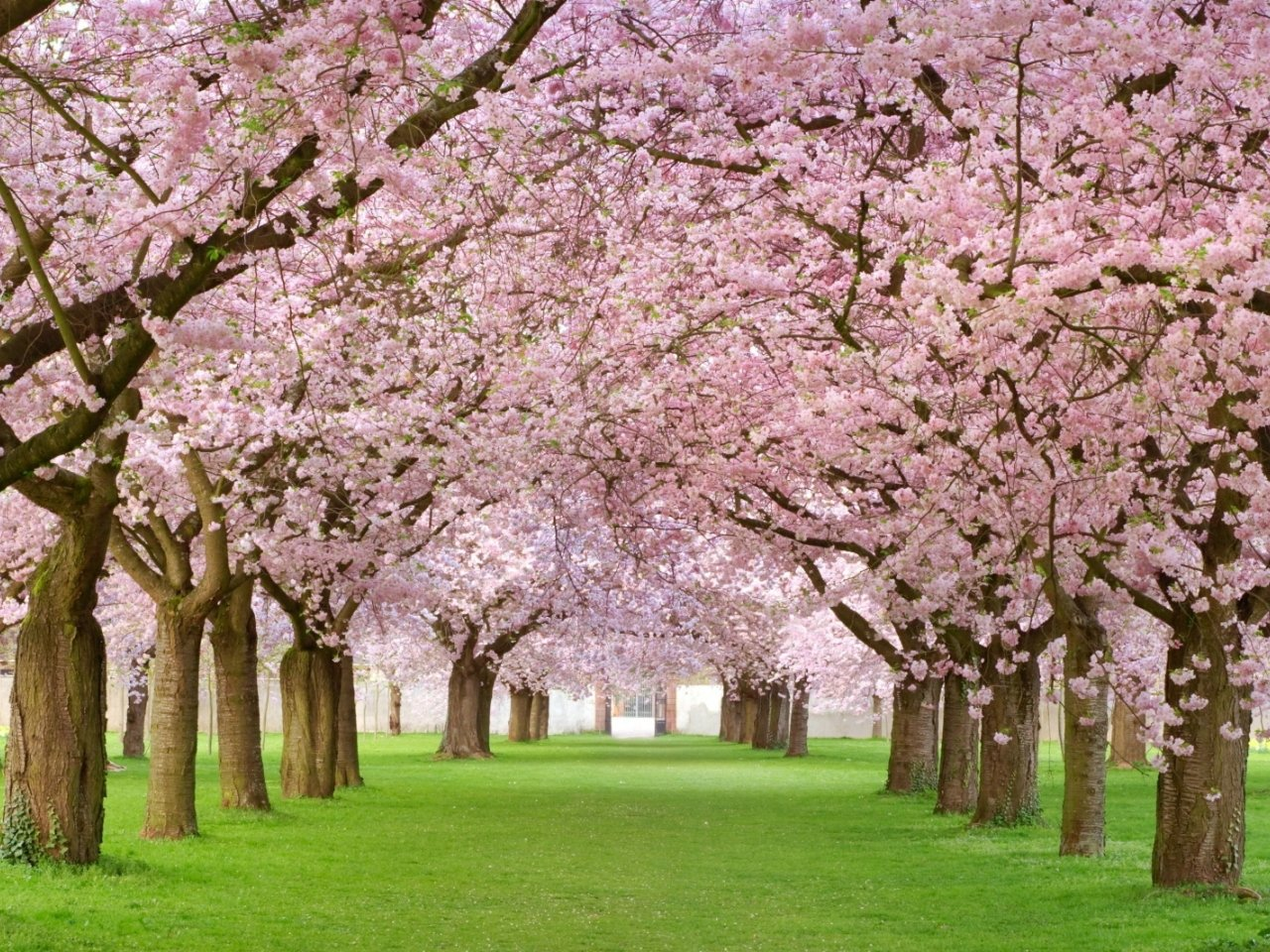 Spring Widescreen Wallpaper Hd Wallpapers 1280x960