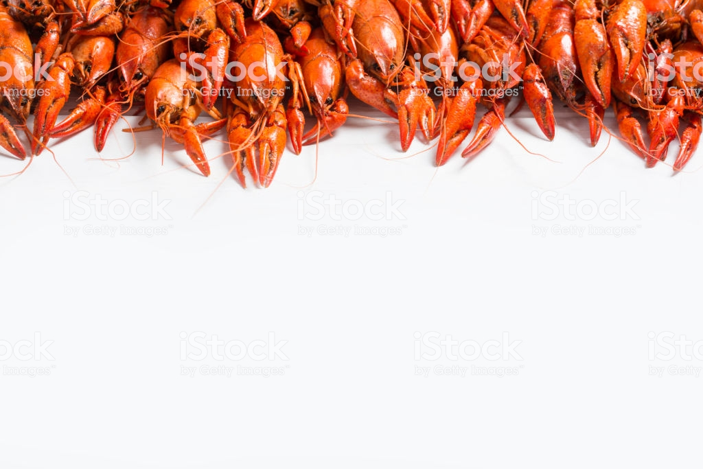 Boiled Crawfish On A White Background Stock Photo   Download Image 1024x683