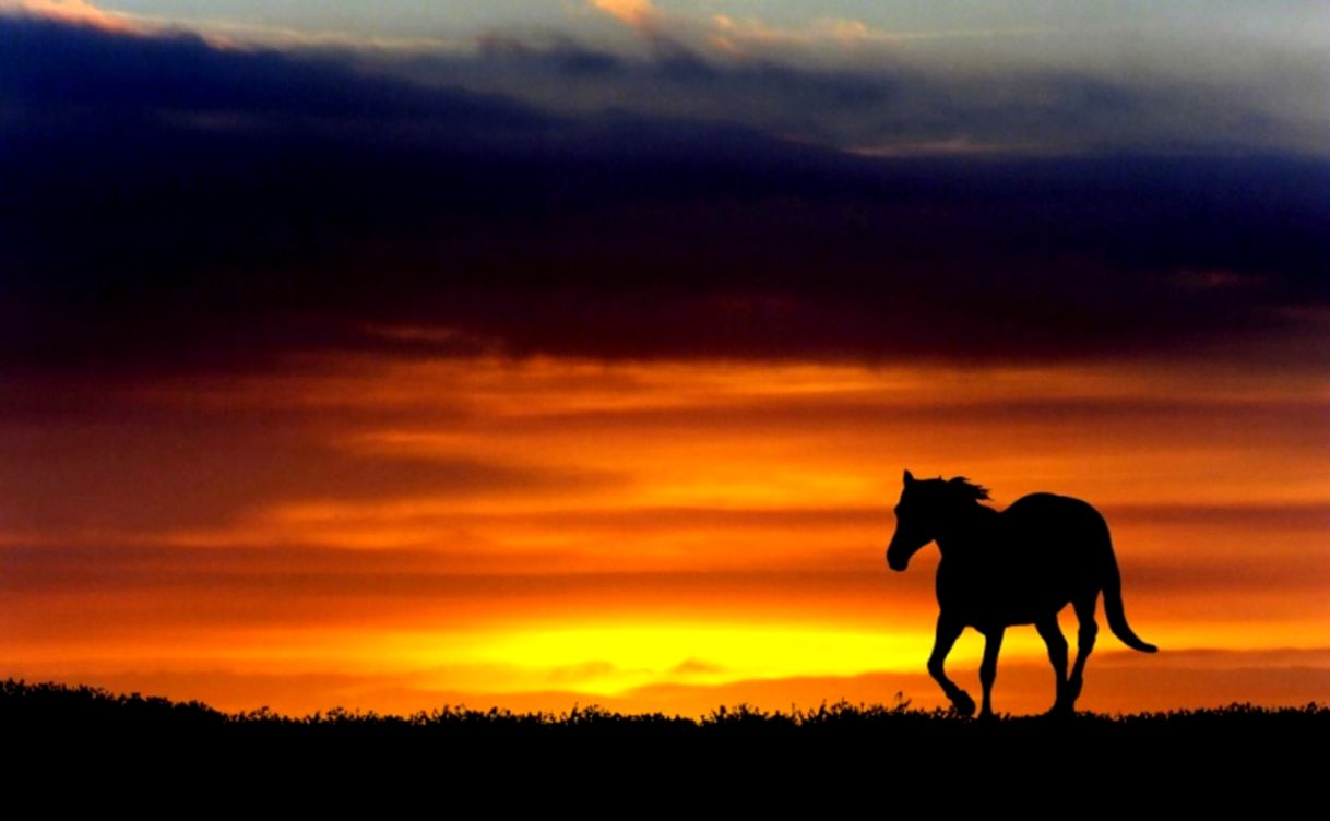 52 Horses At Sunset Wallpapers On Wallpapersafari