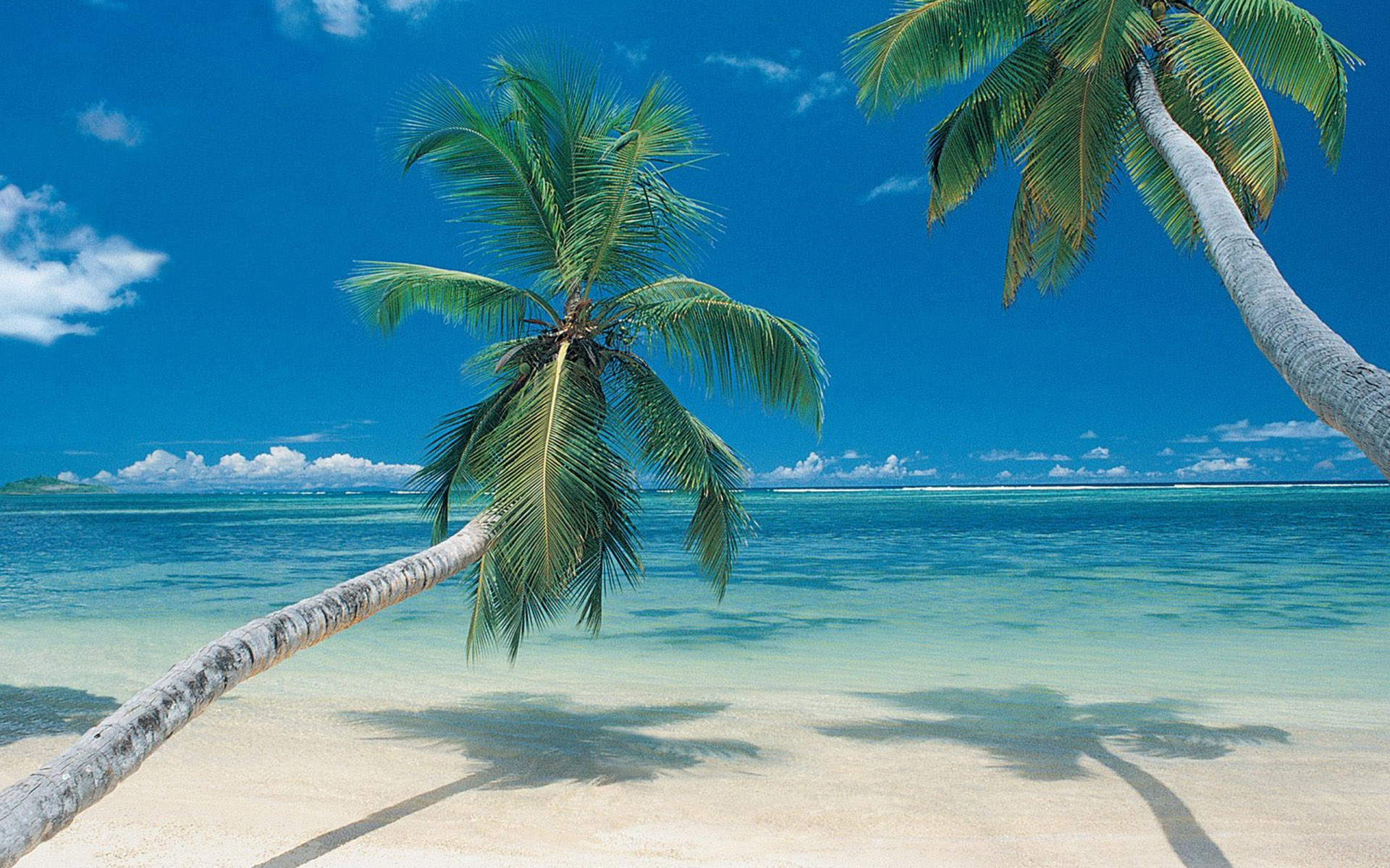 Palm Trees On Beach 1920x1200 Wallpapers 1920x1200 Wallpapers 1920x1200
