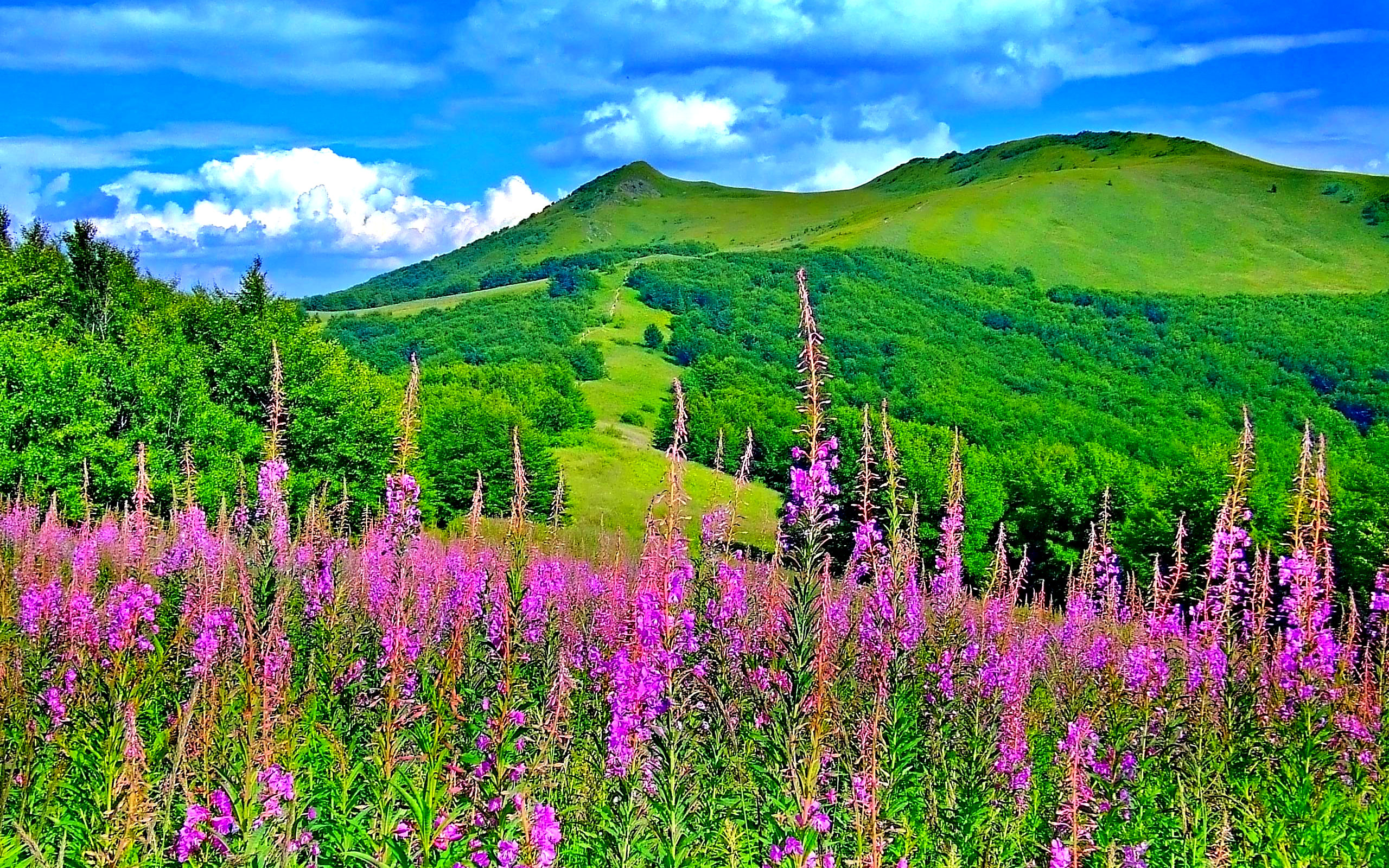 Spring Landscape Wallpapers The Art Mad Wallpapers 2560x1600