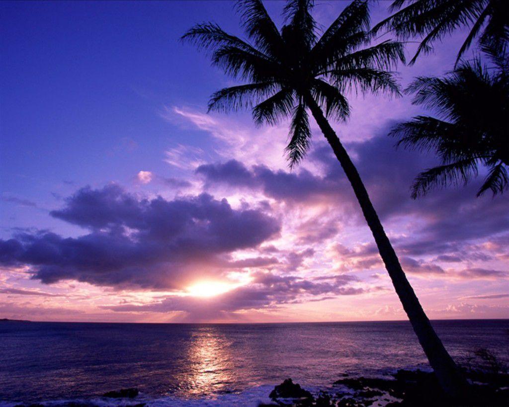Cool HD Nature Desktop Wallpapers: Tropical Sunset Wallpaper