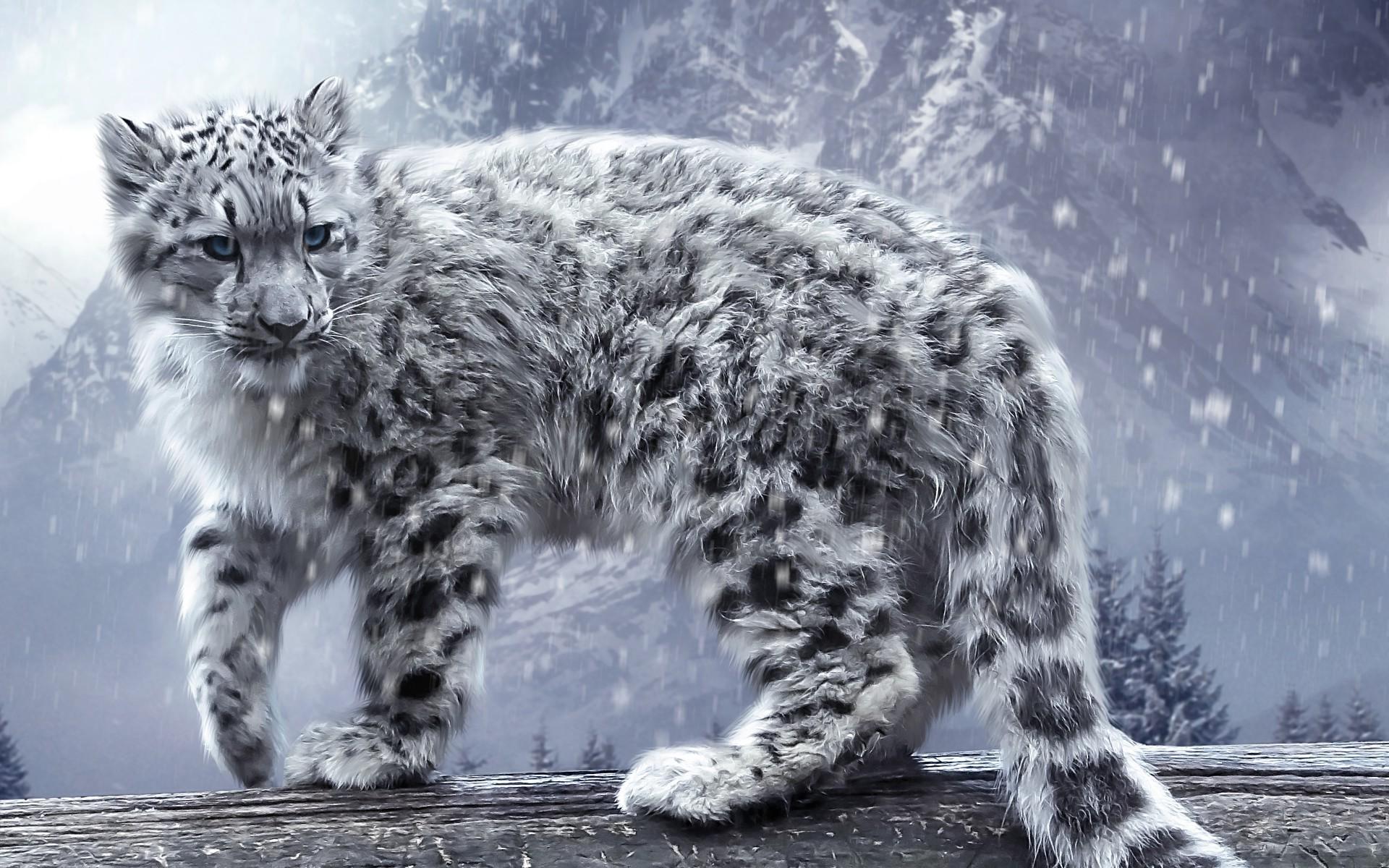 Snow leopard wallpaper   1033945 1920x1200