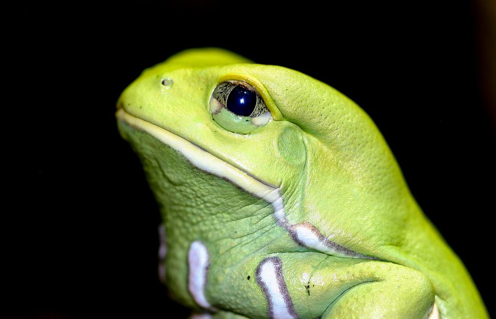 Cute Frog New Photos 1024x658