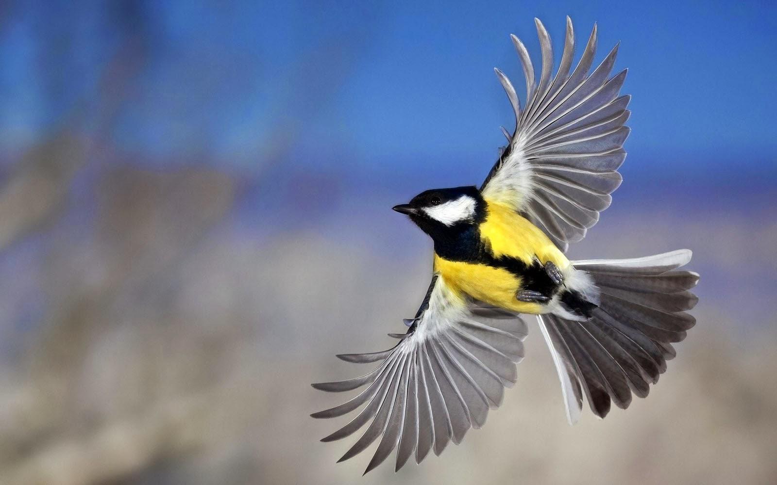 Flying Birds Wallpapers   Top Wallpaper Desktop 1600x1000
