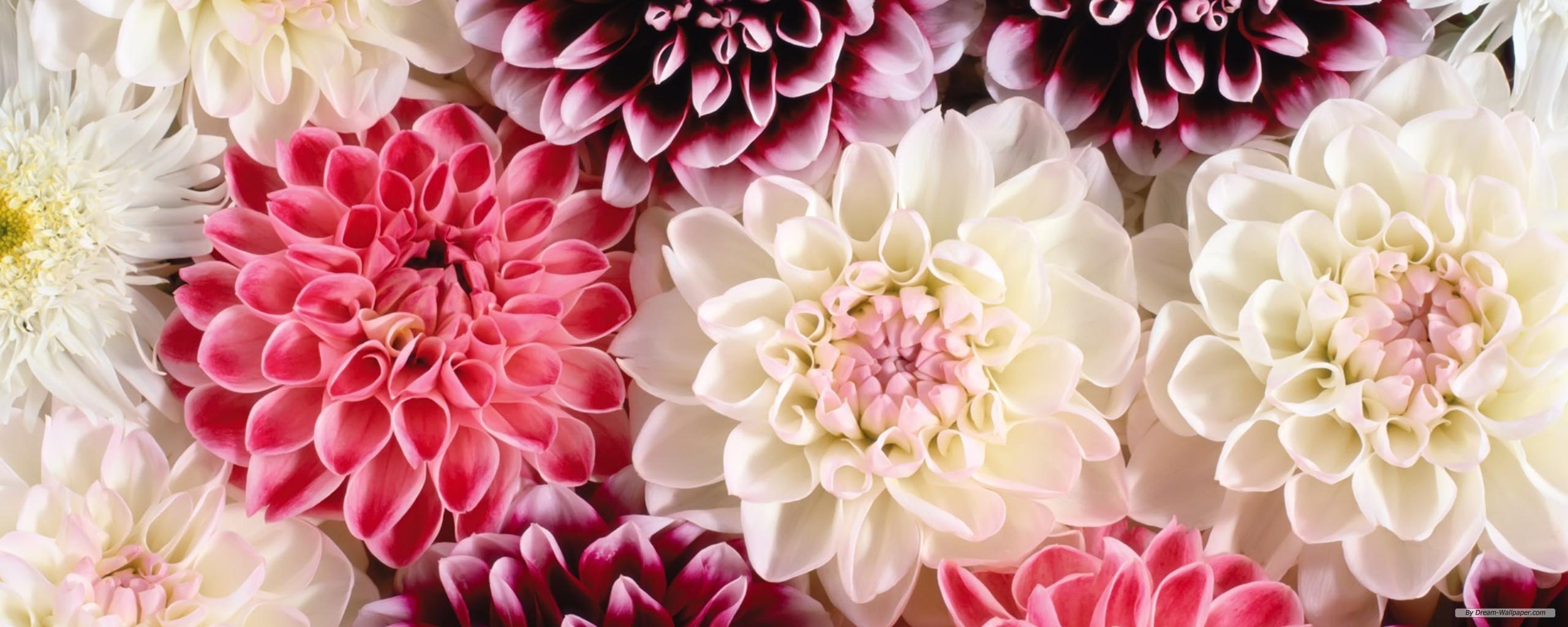 77 Flower Screen Backgrounds On Wallpapersafari
