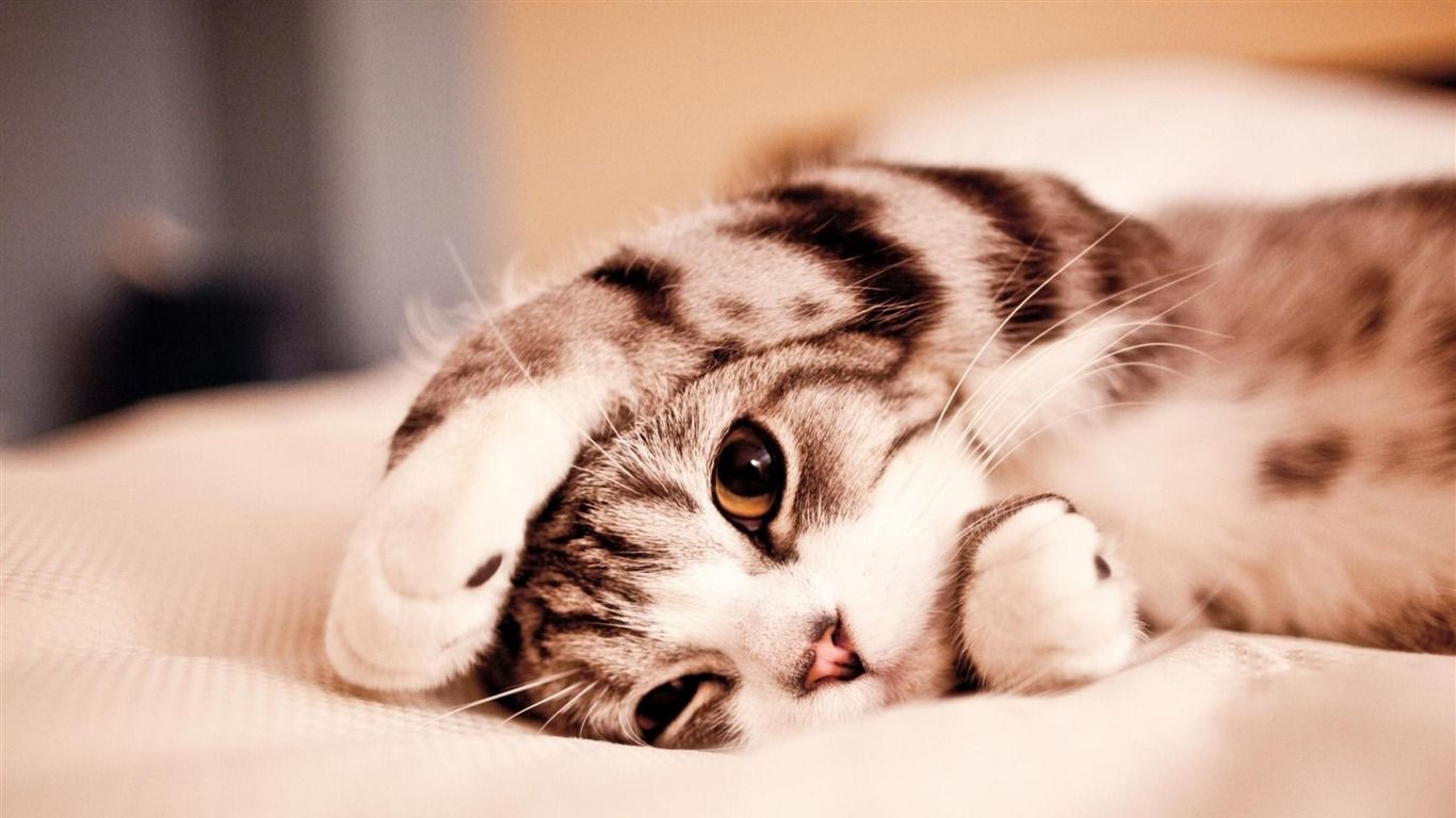 cuteanimalswallpapers Cats do the cutest things Kittens 1366x768