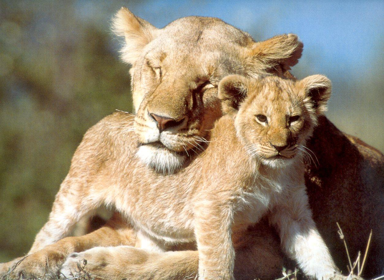 Cute Baby Animal Wallpapers Free