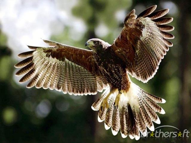 Bird Wallpaper Screensavers 640x480
