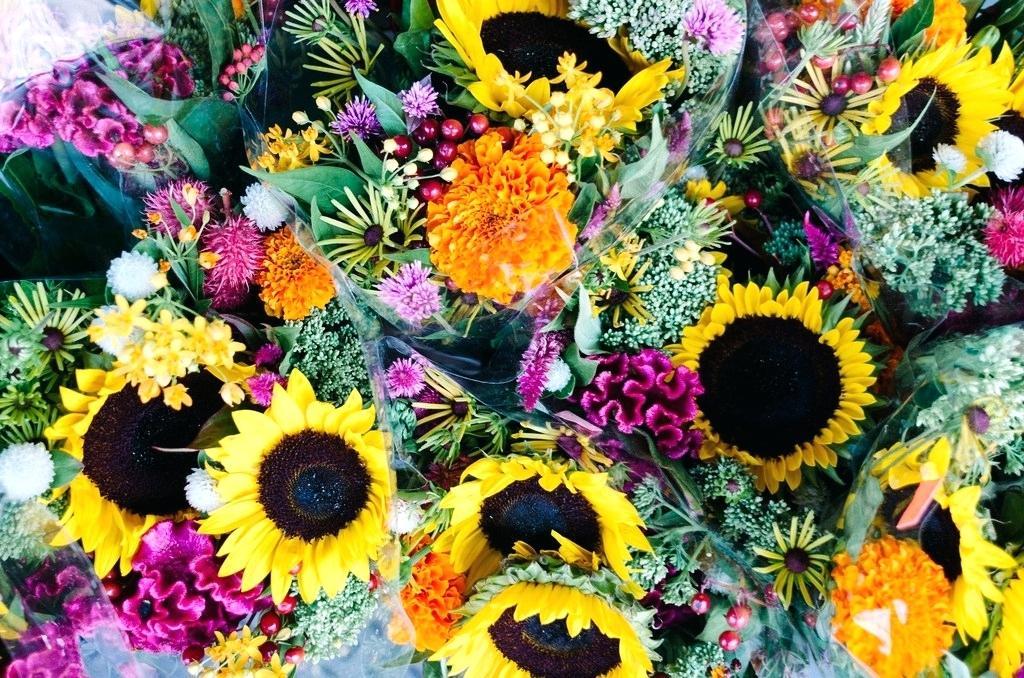 summer flower wallpaper desktop kmetijaselisniknet 1024x678