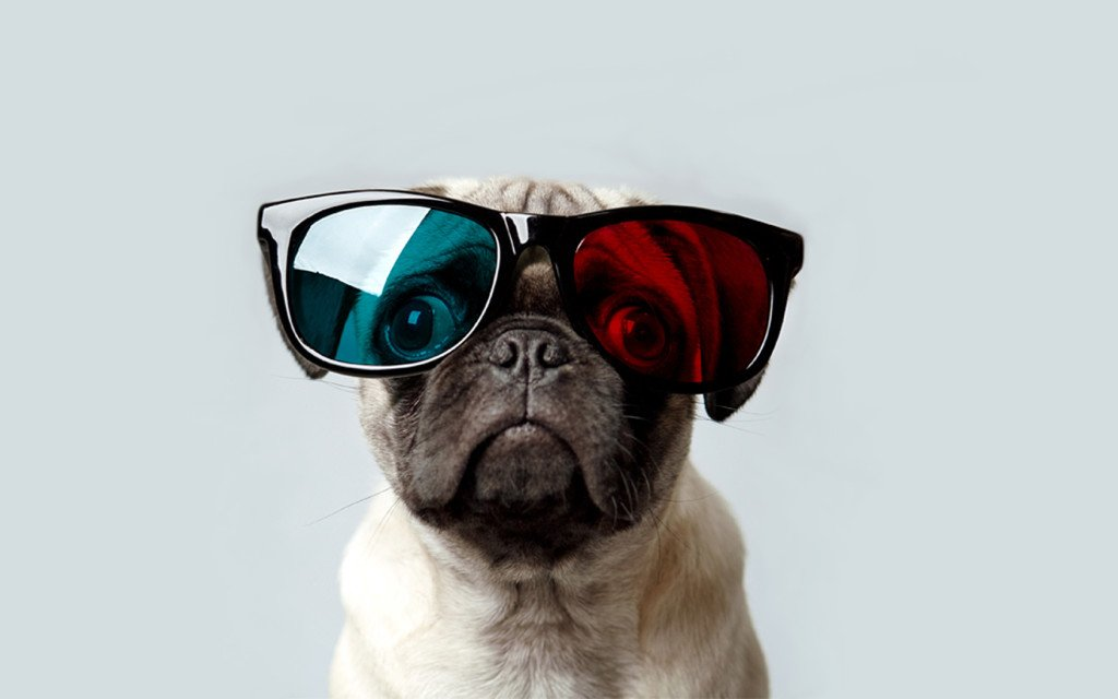 Pug Wallpaper for Walls Animals Insects 1024x640