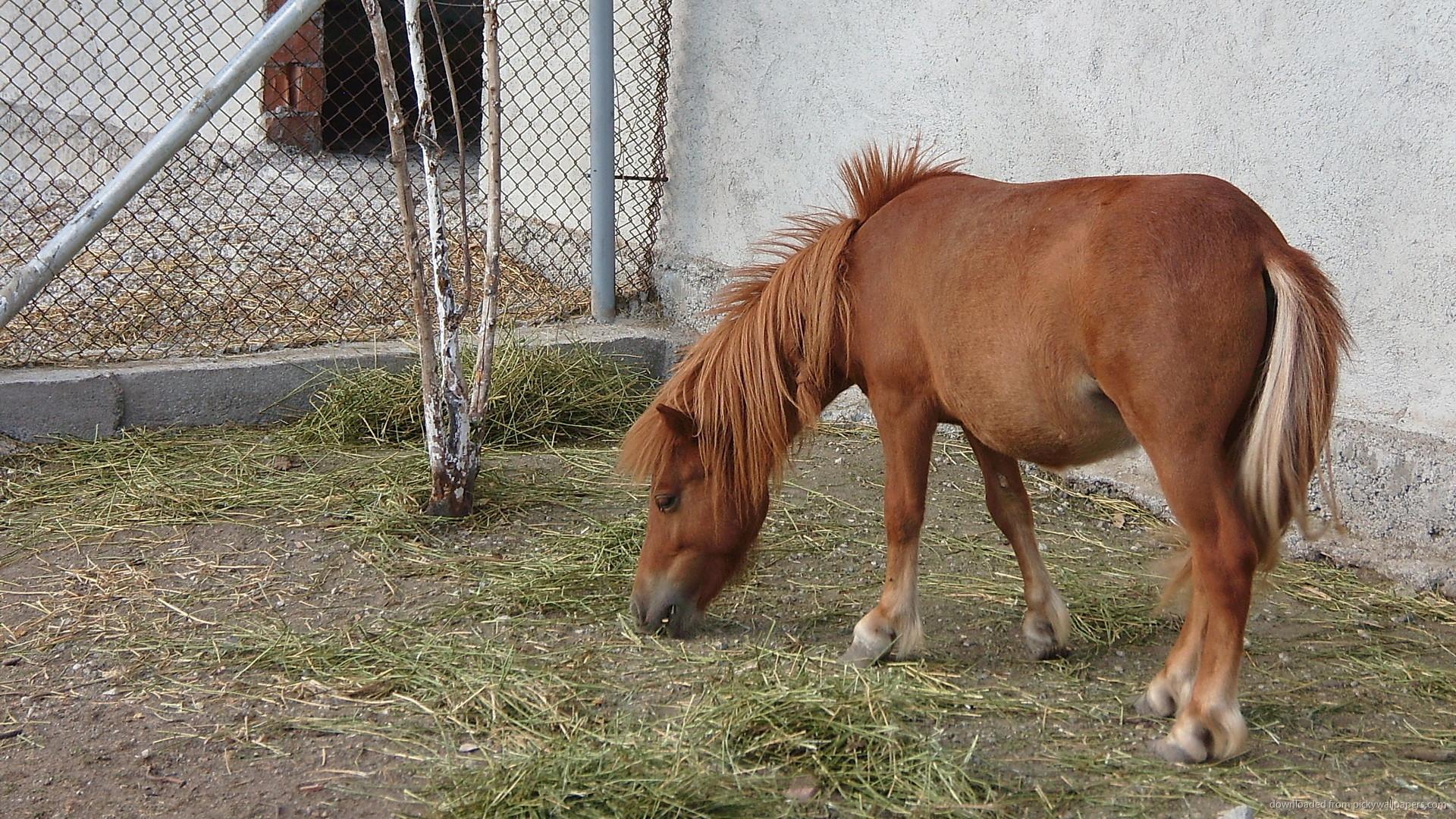 2560x1600 Pony Wallpaper 1920x1080