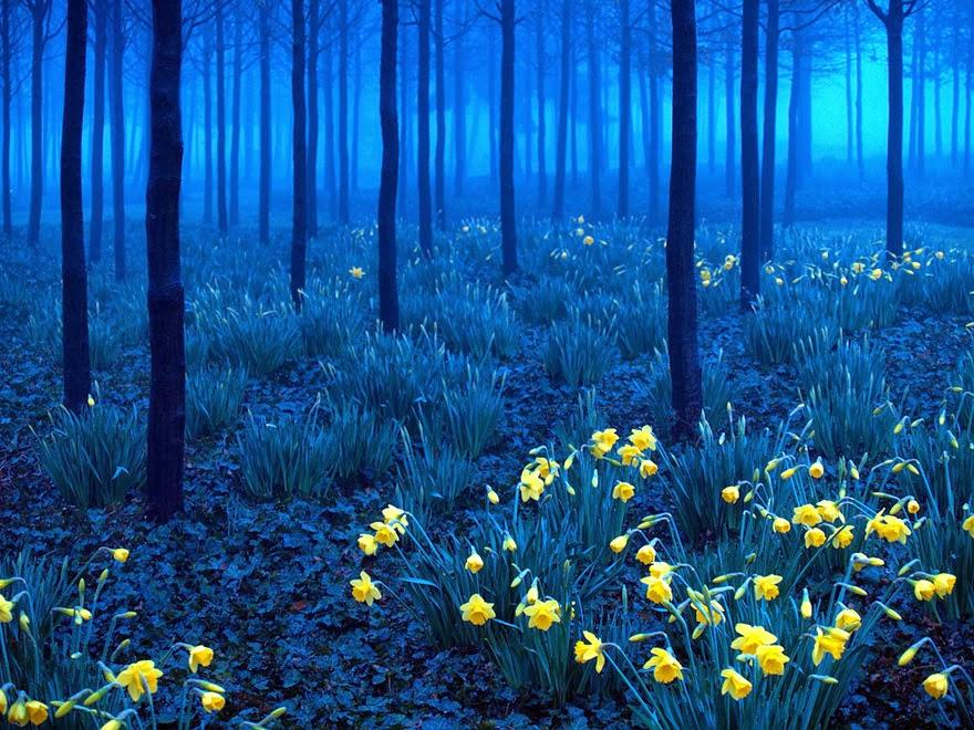 Black Forest Germany Photo Sharing World 880x660