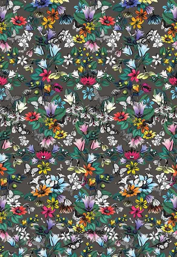 buy wallpaper Osborne and Little TULIPAN Pasha online shop Germany 586x851