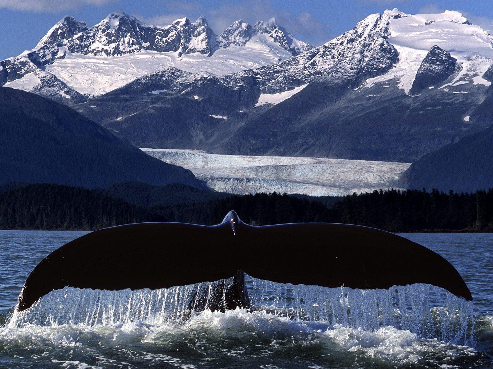 Whale Tail desktop wallpaper 1600x1200