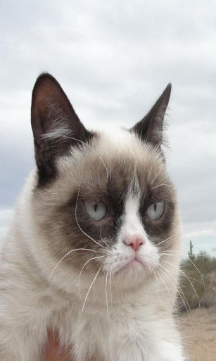 grumpy cat valentine hd wallpapers Car Pictures 307x512