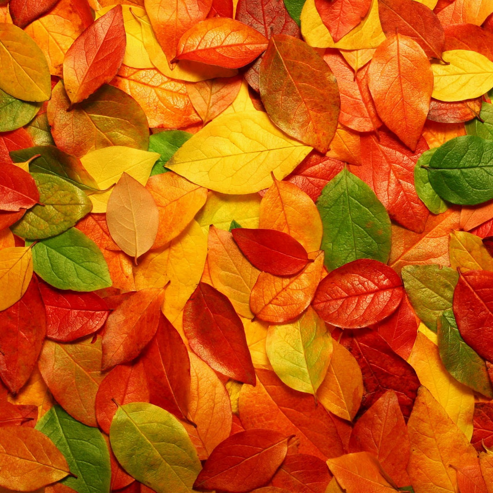 2048 Autumn iPad 3 HD Wallpapers iPad Retina HD Wallpapers 1600x1600