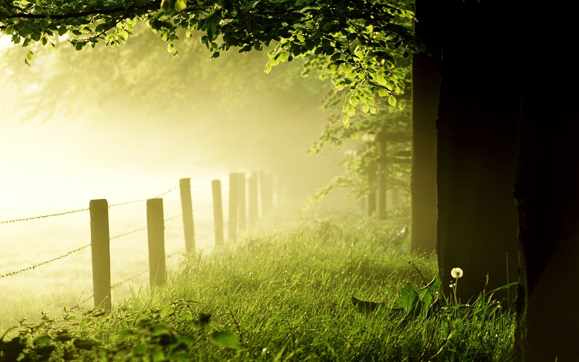 Spring and summer scenery   Scenery Pics Wallpaper 22175505 1920x1200