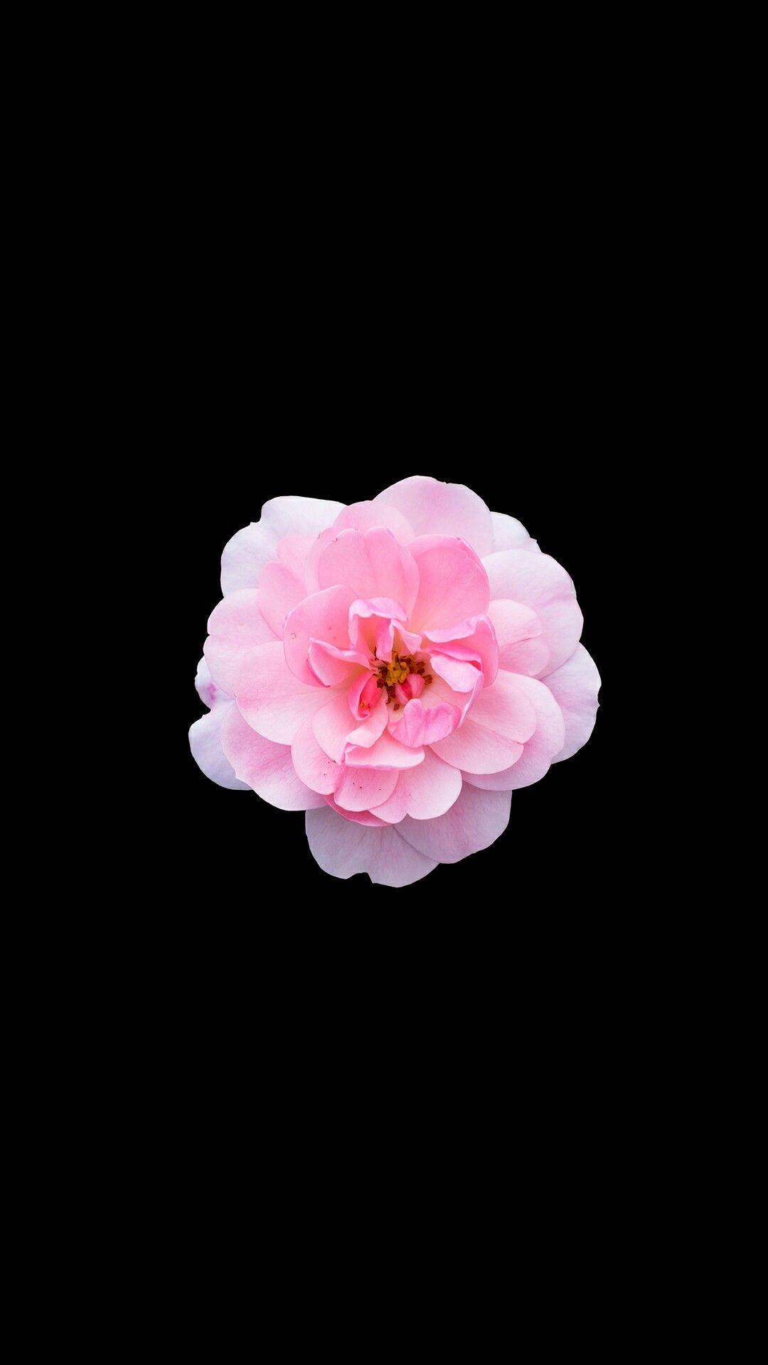 Black Flower Wallpaper 64 images 1080x1920