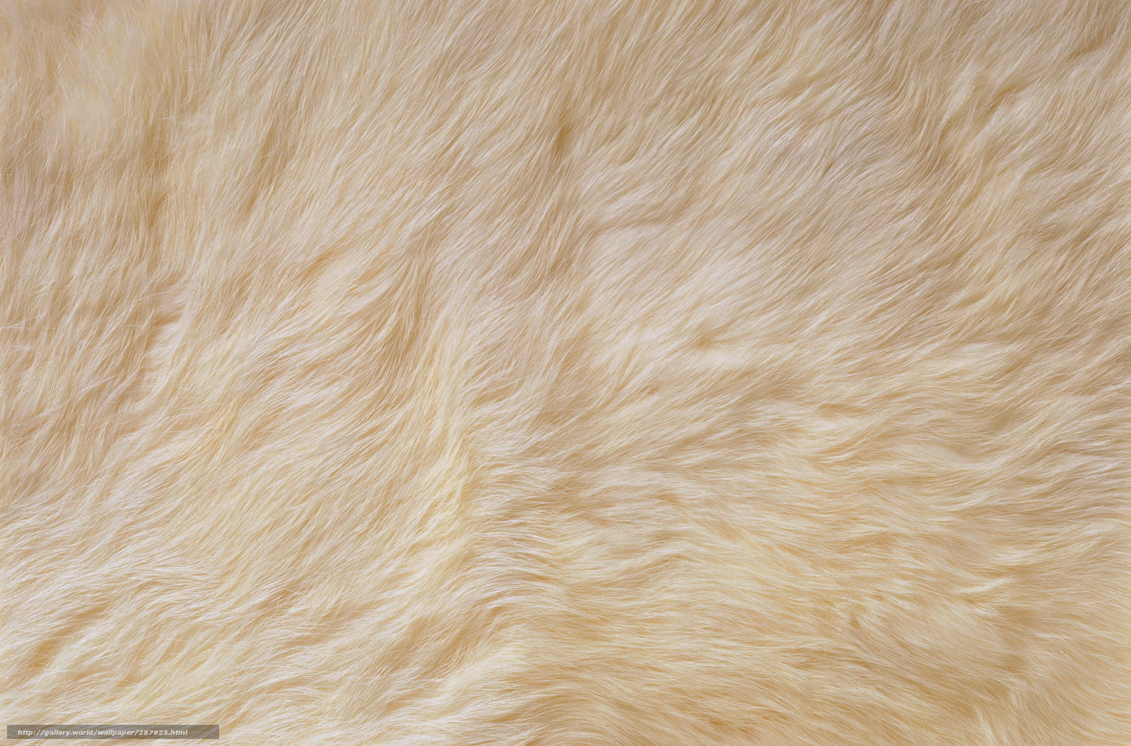 Download wallpaper white fur Textures skin desktop wallpaper in 1600x1056
